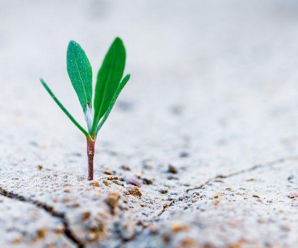 plant shoot in concrete